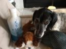 Wisdom of the Angels - ASEA for pets